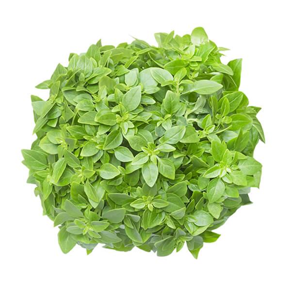 Mini Leaf Basil